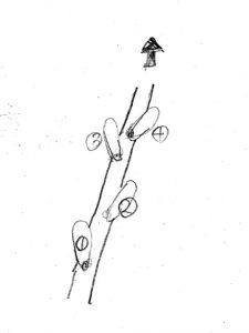 chokusen